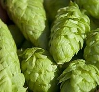 Hop extract