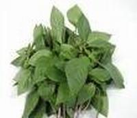 Basilicumolie eth. Comoren Indië 10 ml