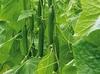 Komkommer extract 50 ml