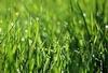 Fresh Gras p.o.