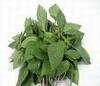 Basilicumolie eth. Comoren 10 ml